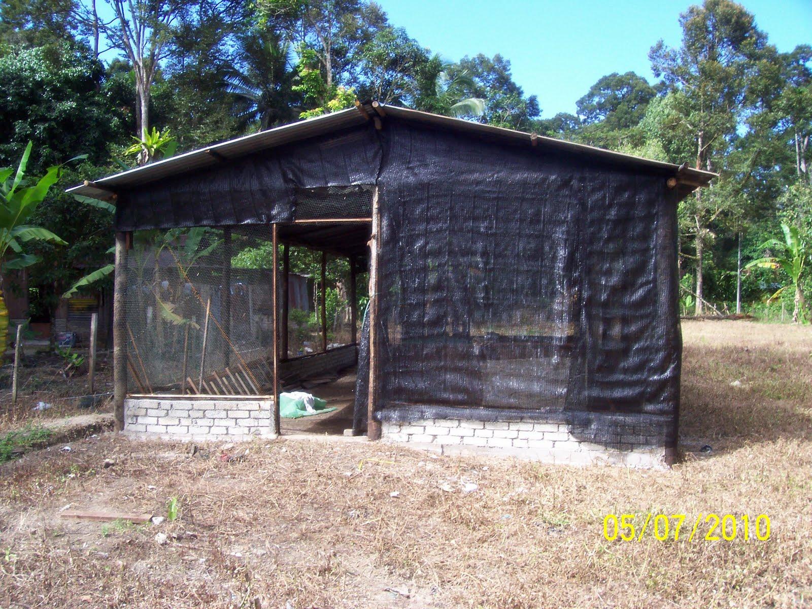 Projek Penternakan Ayam Kampung