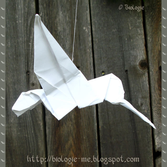 Biologie Origami Hummingbird Tutorial