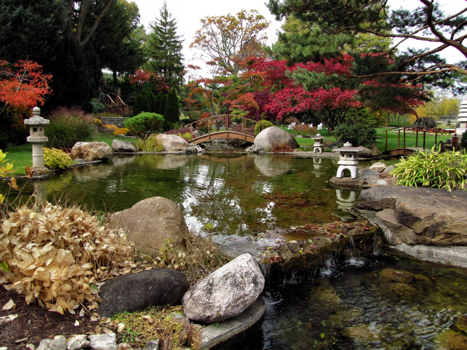 Birds from behind 24 october 2010 for Japanese garden pond design