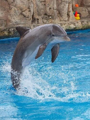 Zoo News Digest: Dolphins possibly second most intelligent ... - photo#38