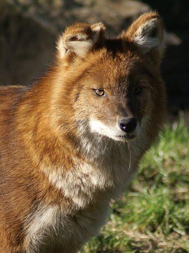 Zoo Jobs Head Of Animal Behaviour Chessington World Of