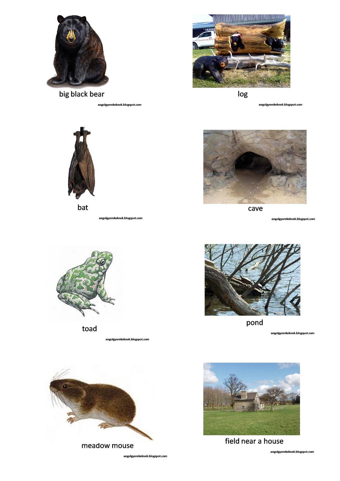 Winter Animals List