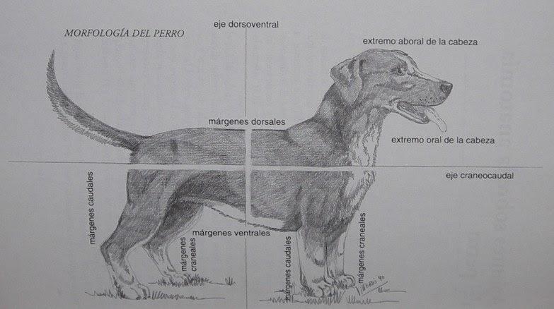 Enciclopedia de animales: Sistema óseo. Anatomía del perro.-on line