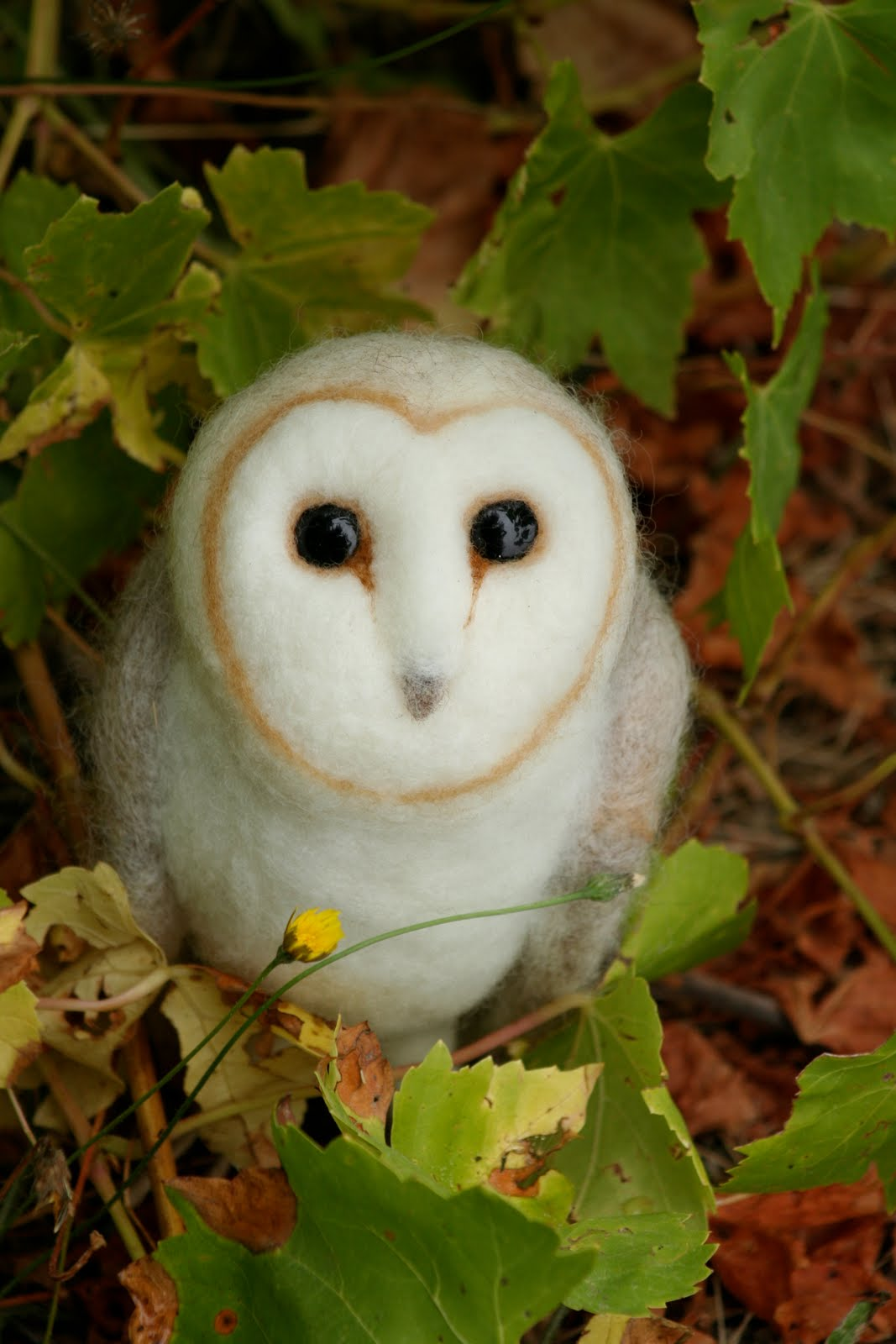 Cute Barn Owl