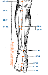 ACUPUNCTURE & ACUPRESSURE: Point Location - Stomach Channel