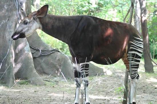 hewan misterius di dunia