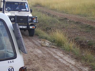 Safari Kenya: cu ghepardul in mijlocul drumului