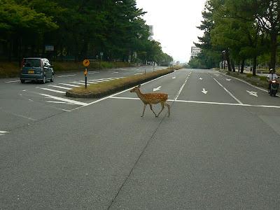 Obiective turistice Japonia: caprioara traversand strada