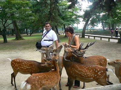 Obiective turistice Japonia: Nara, cu caprioare