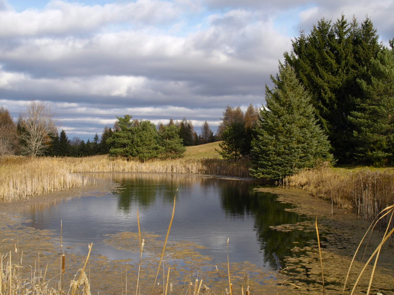 IMAGE AND THOUGHT: Rural Ontario Pondscapes