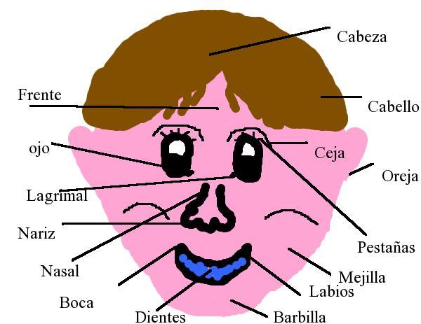 Dibujos De Aplicacio De Partes De La Cara: Xominoblog: Partes De La Cara