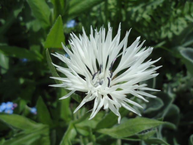 blomster typer lilla