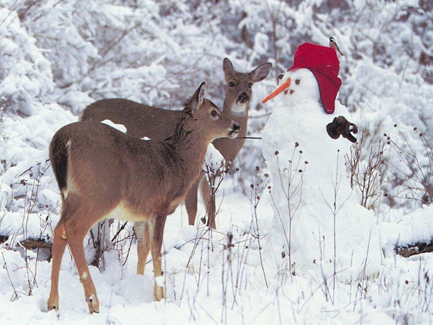 Christmas Winter Scenes with Deer and Snowman