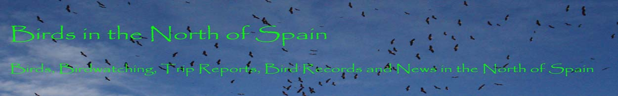 Birds in the North of Spain