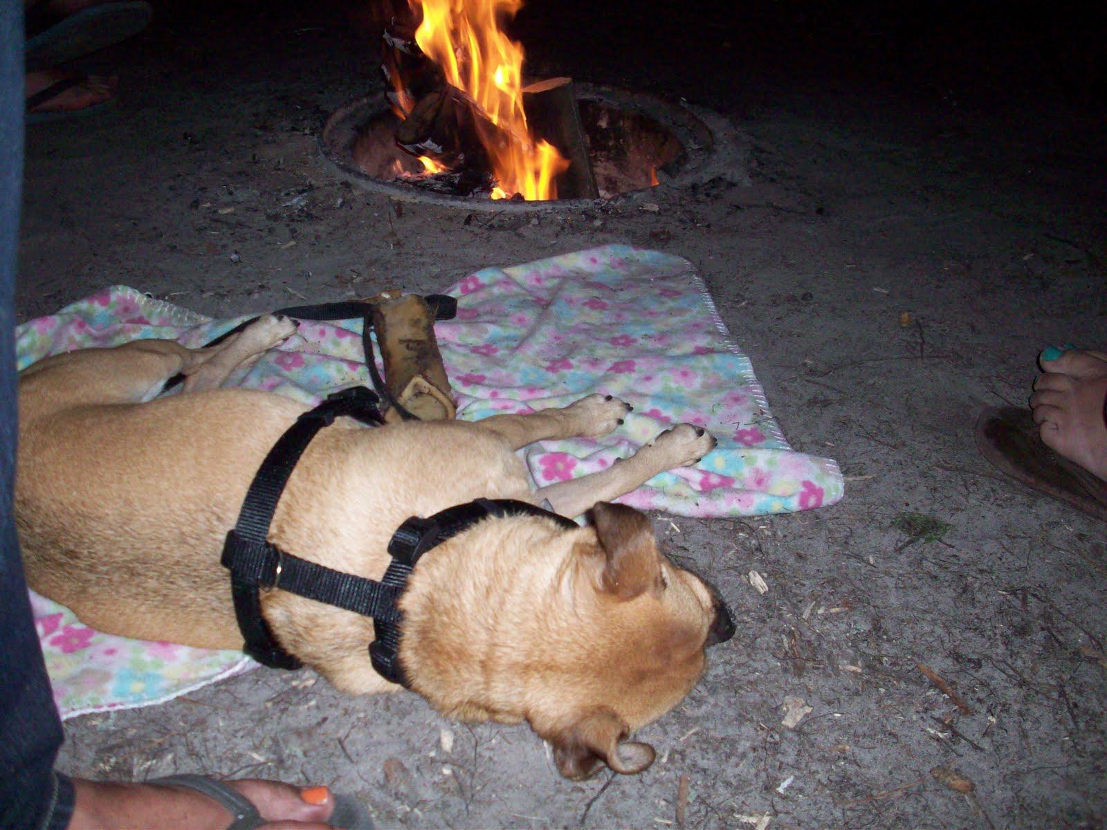 Lola The Puggle: I went tubing/camping!