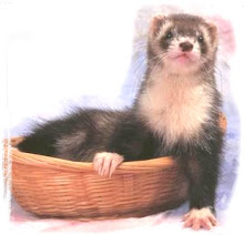 Please Consider Ferret Rescue and/or Adoption... Thank You from All the Fuzzies in the World ♥...