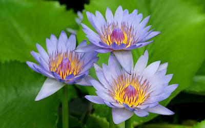 Resultado de imagen de flores hermosas