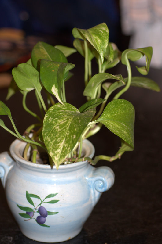 Durable Plants For The Garden: Durable Gardening: Encourage Them To Grow