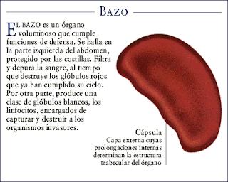 Bazo del funciones pdf