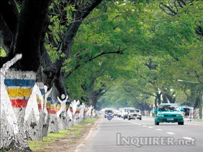 San Fernando, Pampanga, Philippines, Cut Trees, Road widening, DENR, Project, Environmental, Protest, Artist