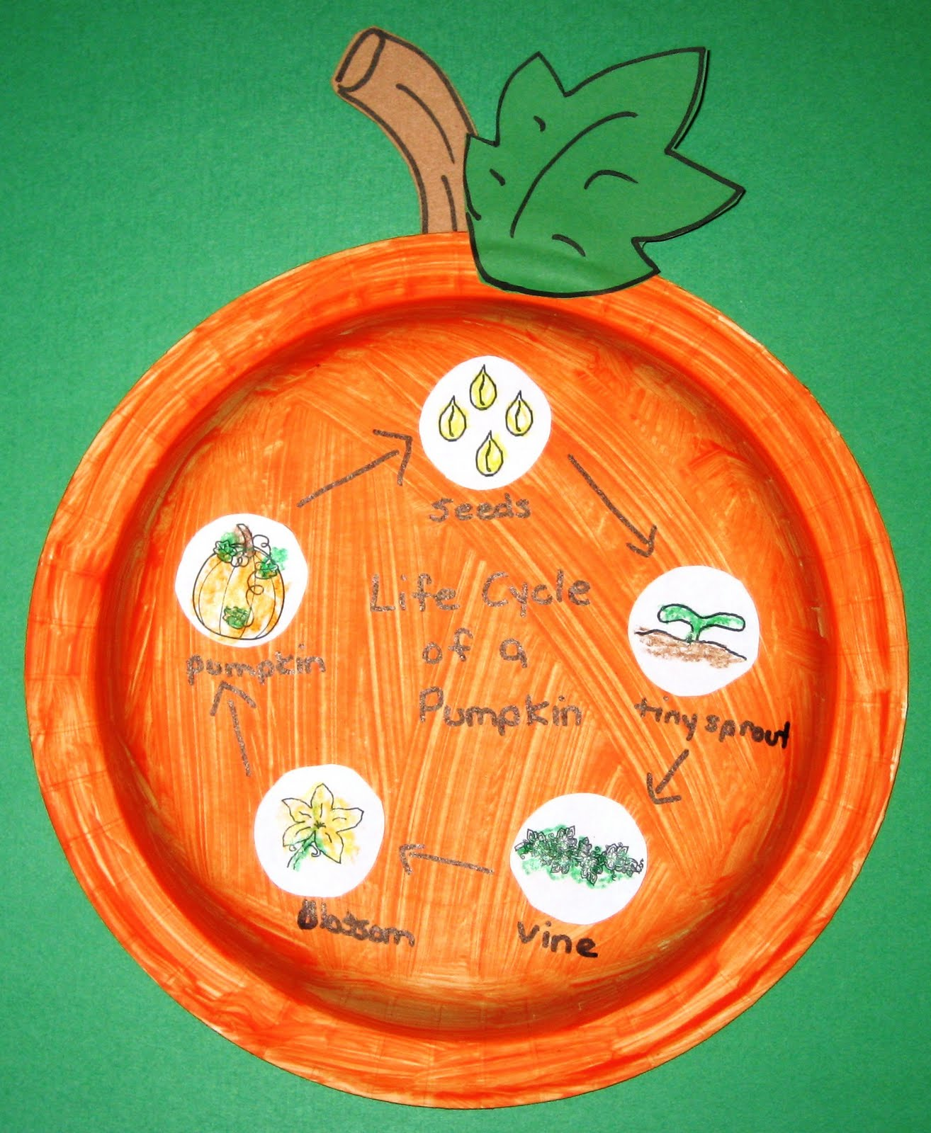 Pumpkin Seed Diagram S Video Wiring Hayes 39 Life Cycle Publish With Glogster
