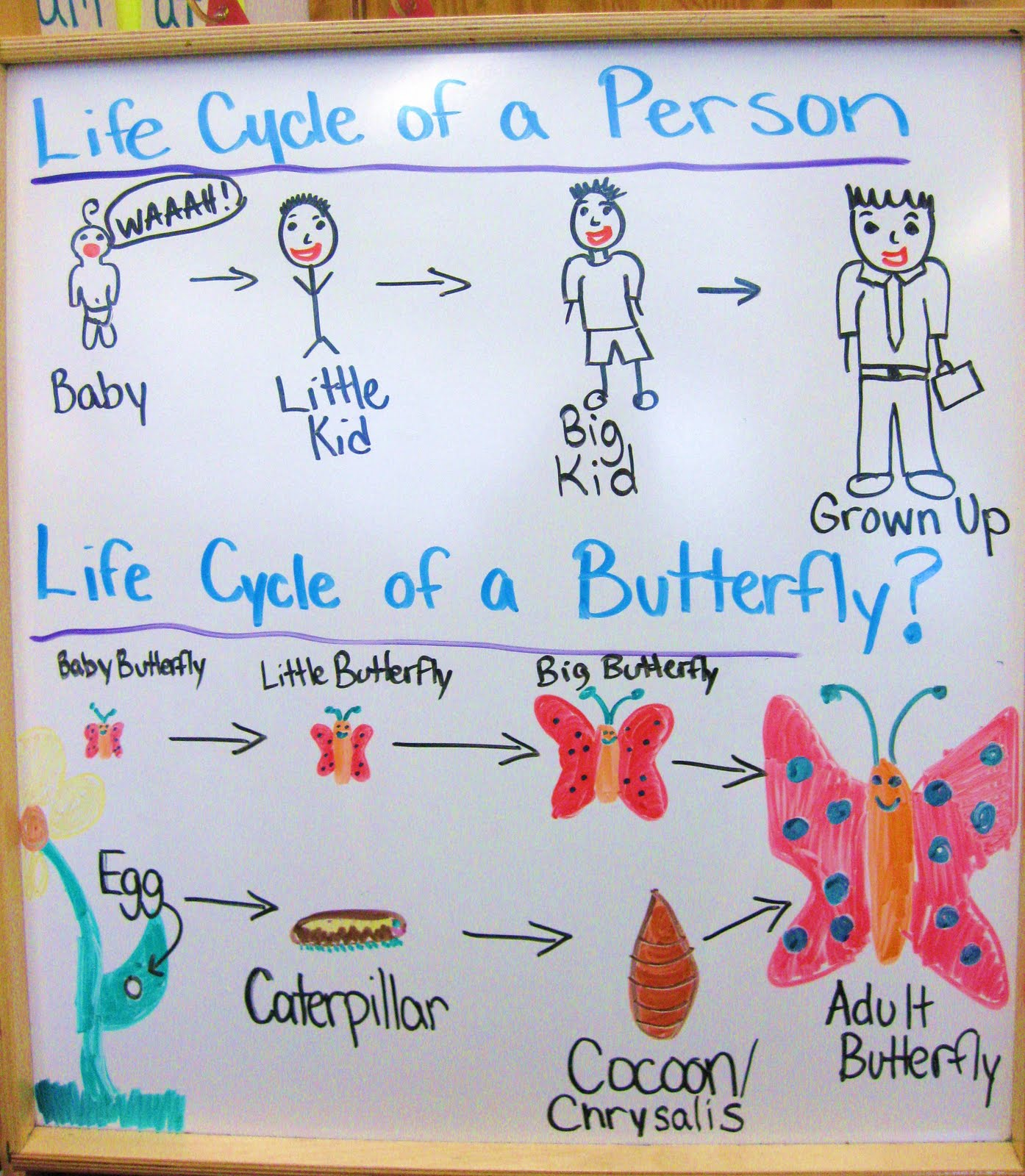 Life Cycle Of A Butterfly Week