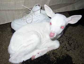 njutbara ting fascinerad av albinos. Black Bedroom Furniture Sets. Home Design Ideas