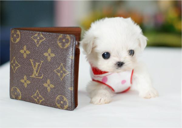 Funz -Funz: Very Cute Little Puppies