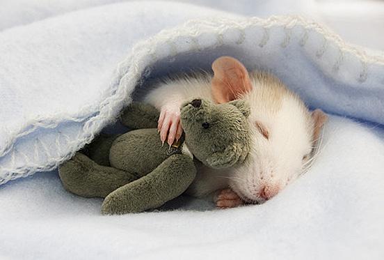 Cute Baby Animals Photos Bring Good Mode