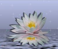 Spirituele Vrienden Blog Januari 2011