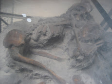 Canine Victim of Versuvius