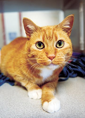Pet Sitter Tails: SPCA Cat Orientation