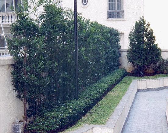 Mirian decor jardim para muros internos e de fachadas for Tela para muro verde
