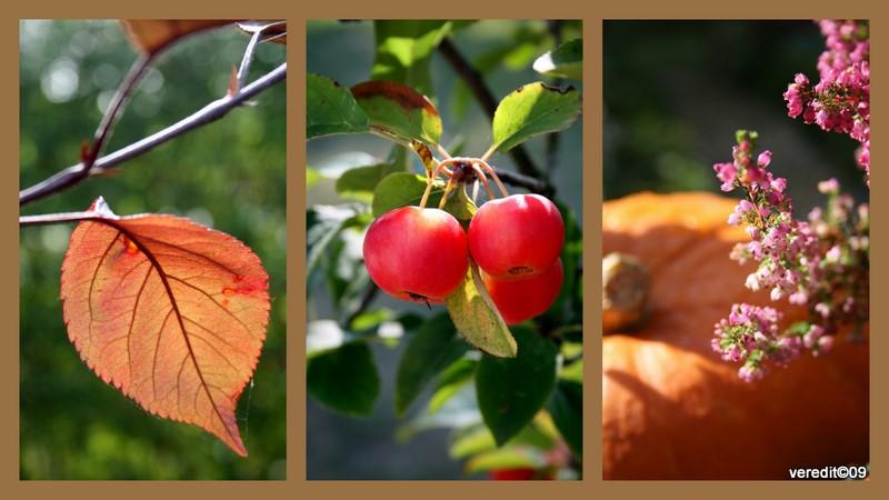 Kinder Gedichte Welt Der Herbst Als Farber Robert Reinik