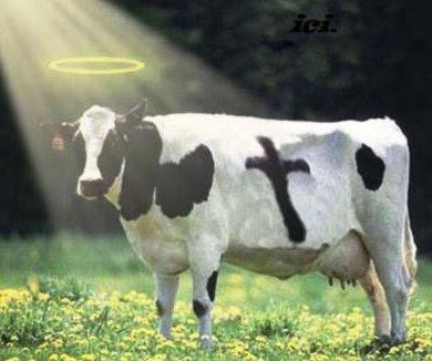 Helig ko