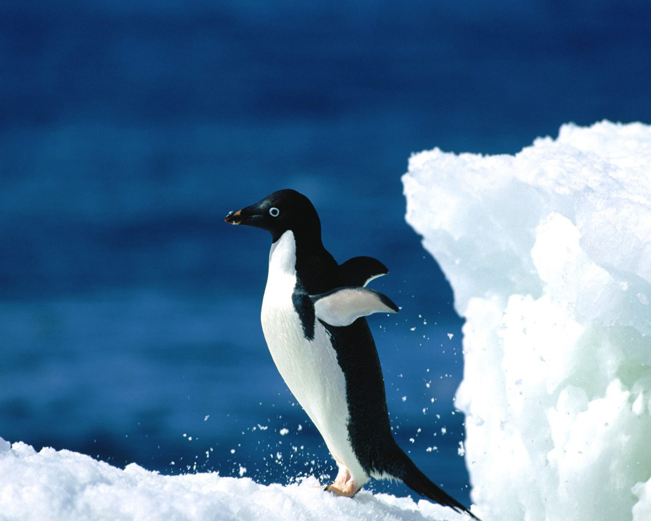 penguins wallpaper free animal wallpapers