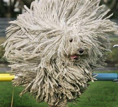 germany dog show