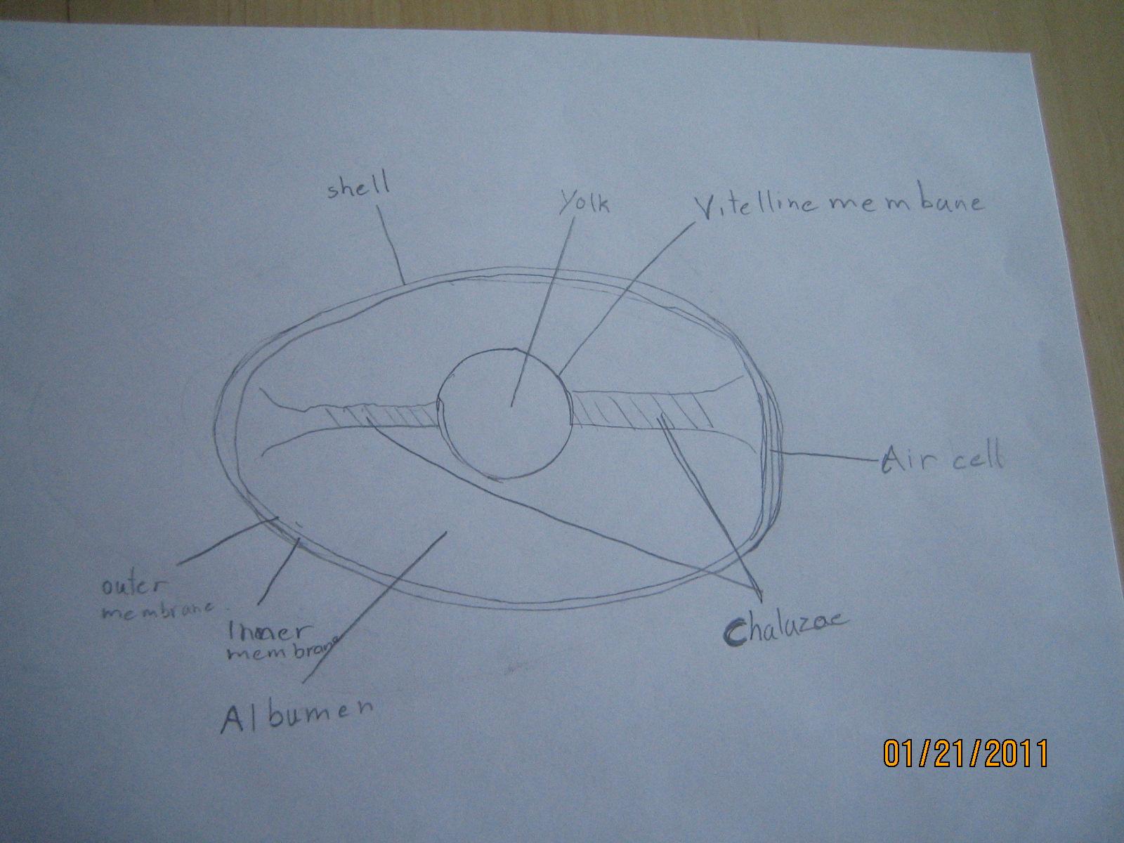 Umamah Learning Academy An Egg Unit Study