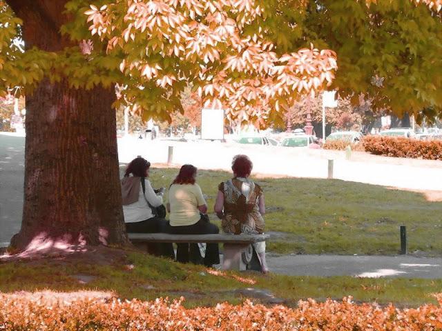 Debajo de un arbol tres mujeres de espaldas  sentadas en un banco