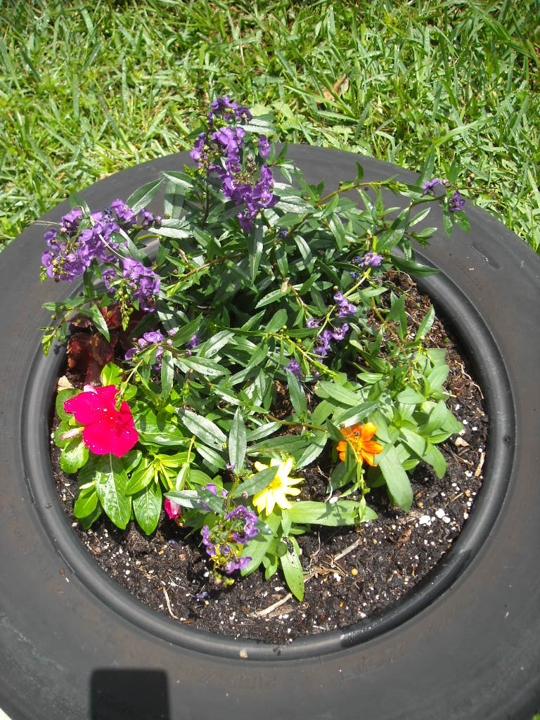 A Succulent Life!: Planted flower tire gardens!
