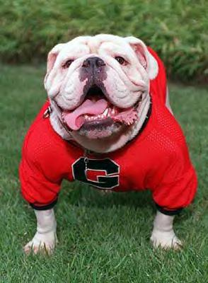 georgia bulldog puppies advice about the uga admission process admitted applicants 4769