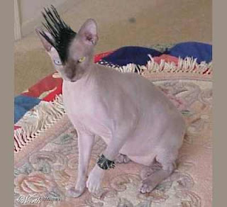 Foto Gambar Kucing