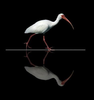 35 espantosas fotos manipuladas por Peter Holme 4