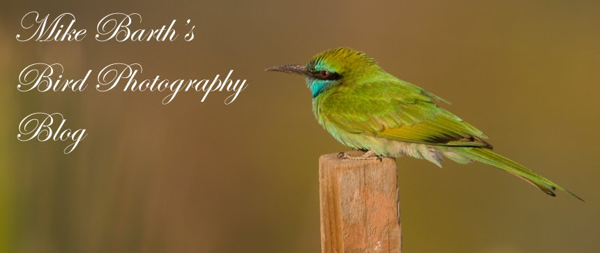 Mike Barth Bird Photography &