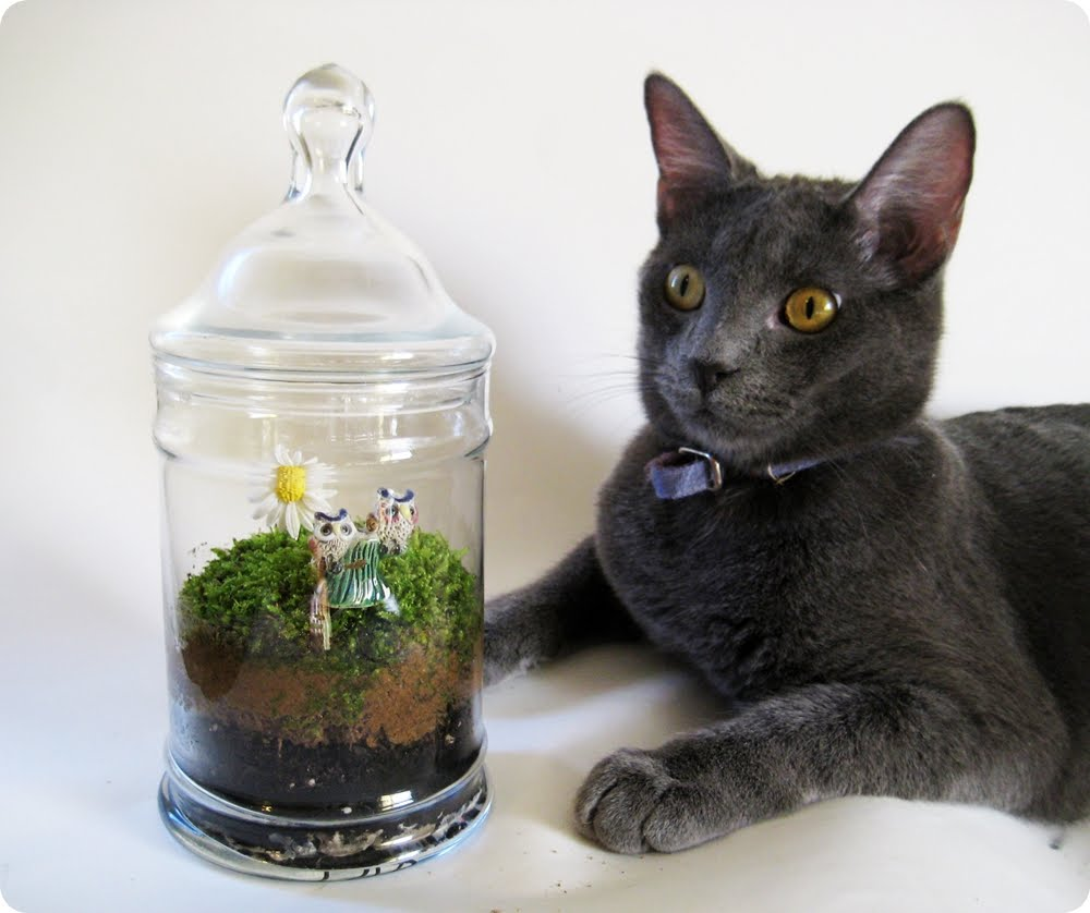 Apothecary Jar Moss Terrarium How To Sday Shrimp Salad Circus