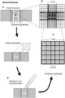 Operar equipo y materiales de Laboratorio Clinico: Apunte