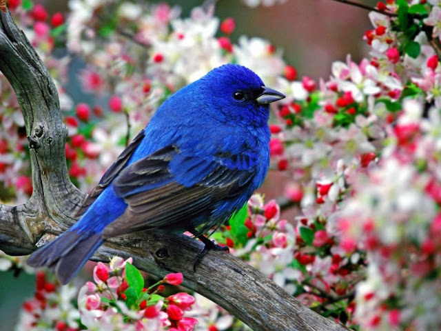 Wallpaper Bollywood Actrests 2011: Beautiful Birds Pictures