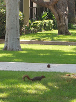 Squirrel on driveway in Burbank