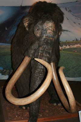 American Mastodon display