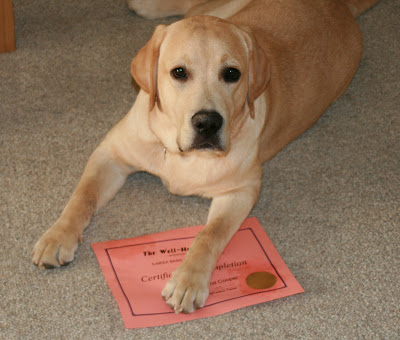 Cooper and his dog training certificate